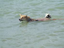 初、泳ぎ!