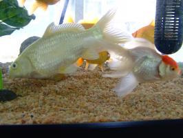 事務所の魚