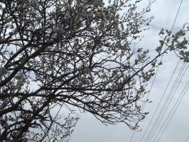 こちらも延岡の梅