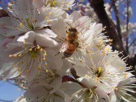 蜂も忙しそうでした。