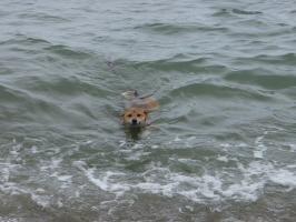 2度目の海水浴