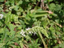 小さなハチ