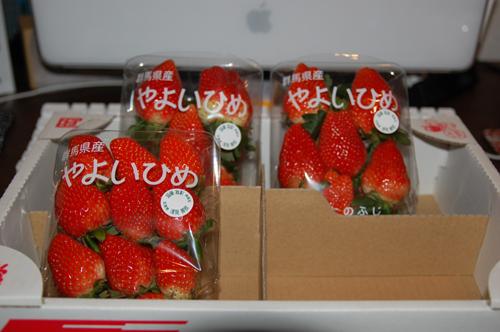 ichigo3.jpg