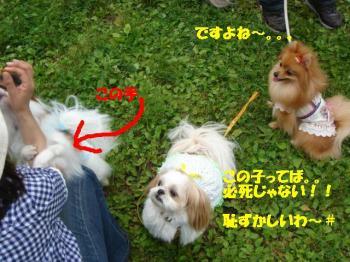 DSC05374-・祇convert_20080519223459