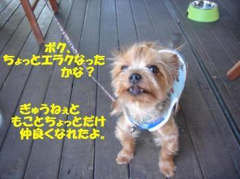 DSC05804-・祇convert_20080901234341