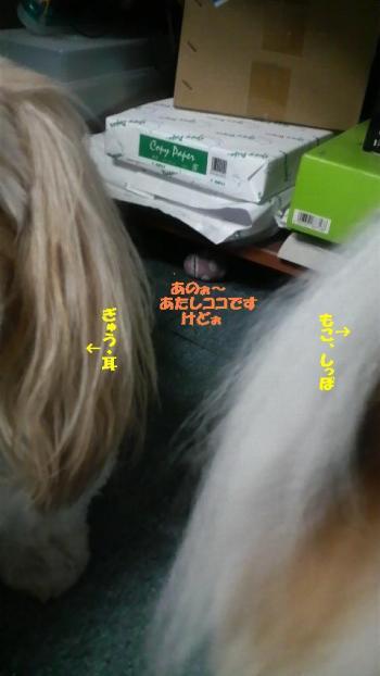 2008091321280001_convert_20080929213021.jpg