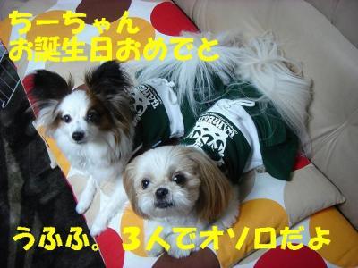 DSC07027-・祇convert_20090226225105