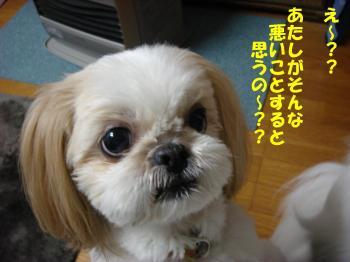 DSC06969-・祇convert_20090319083621