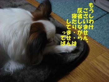 DSC07194繝シ・祇convert_20090324231301