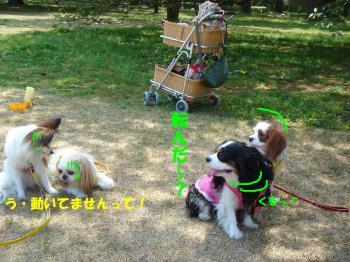 DSC07468繝シ・祇convert_20090422212237