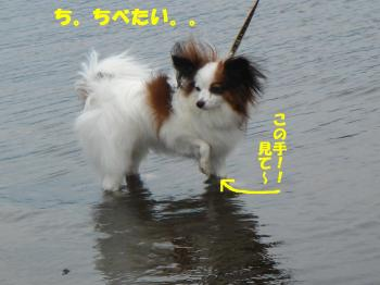 DSC07745繝シ・祇convert_20090729234938