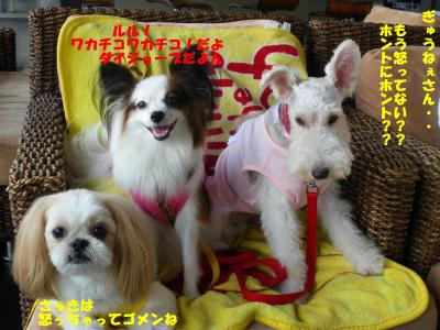 IMGP0451繝シ・祇convert_20090830222203