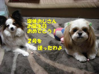 DSC07101_convert_20090308183412.jpg