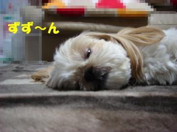 DSC07144_convert_20090327234720.jpg