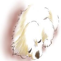 haac-dog