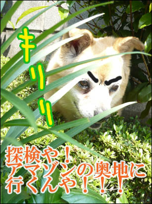 YUKI11_A.jpg
