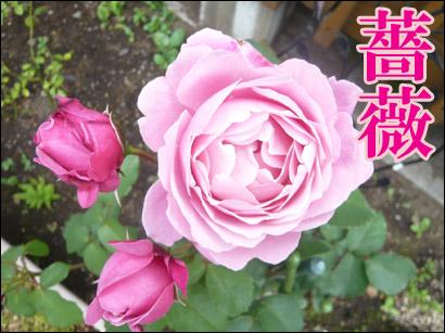 YUKI11_B.jpg