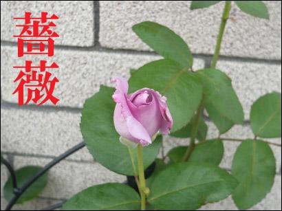 YUKI11_C.jpg