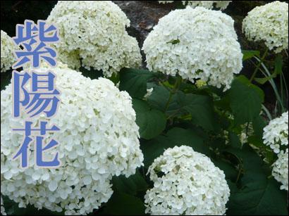 YUKI11_D.jpg