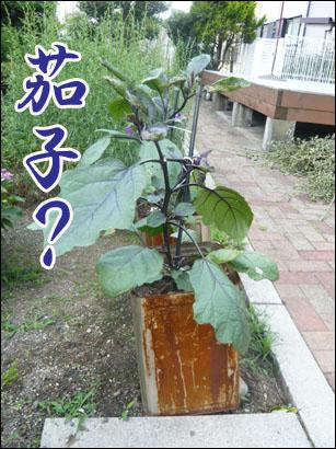 YUKI11_E.jpg