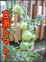 YUKI11_J.jpg