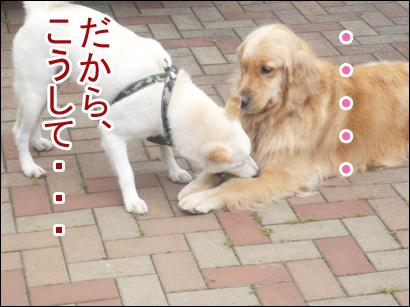 YUKI12_D.jpg