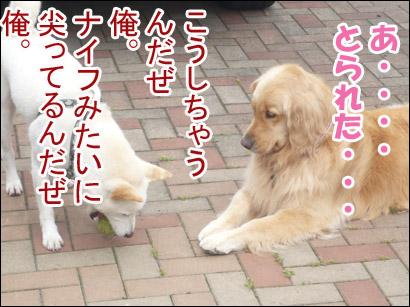 YUKI12_E.jpg
