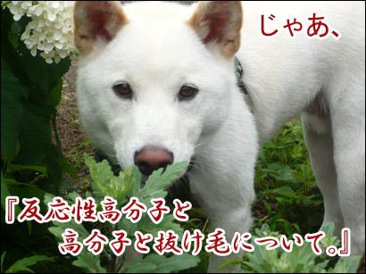 YUKI12_F.jpg