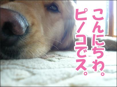 YUKI13_A.jpg