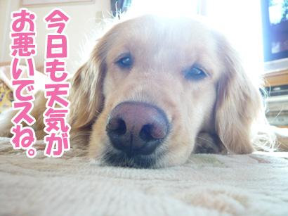 YUKI13_B.jpg