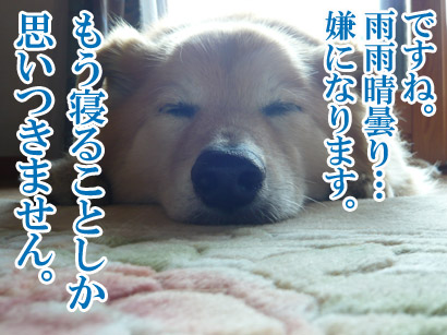 YUKI13_C.jpg