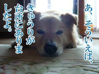 YUKI13_D.jpg