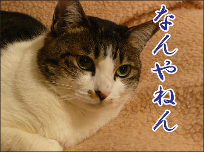 YUKI13_G.jpg