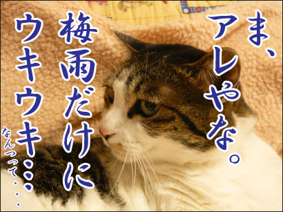 YUKI13_H.jpg