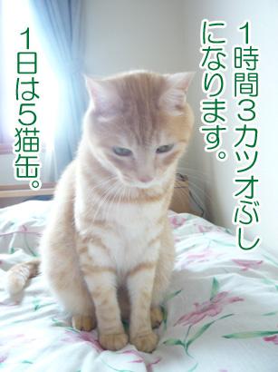 YUKI16_C.jpg