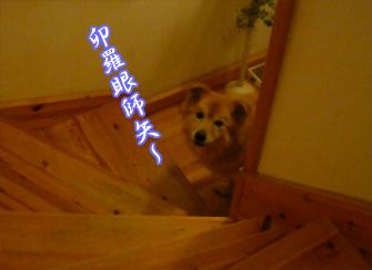 YUKI20_B.jpg