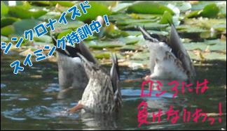 YUKI2_1.jpg