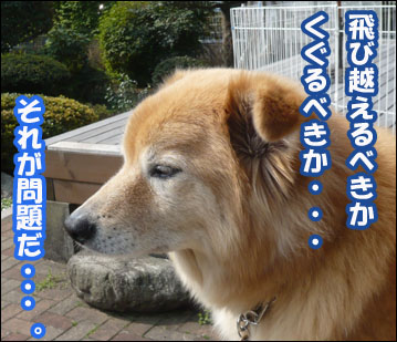 YUKI3_E.jpg