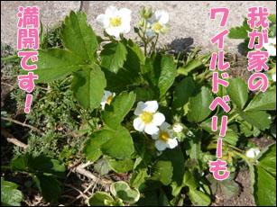 YUKI4_A.jpg