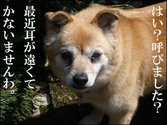 YUKI4_C.jpg