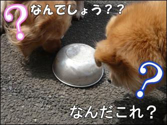 YUKI5_C.jpg