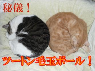 YUKI6_A.jpg