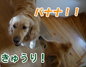 YUKI7_C.jpg