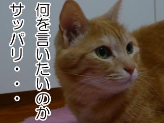 YUKI8_A.jpg