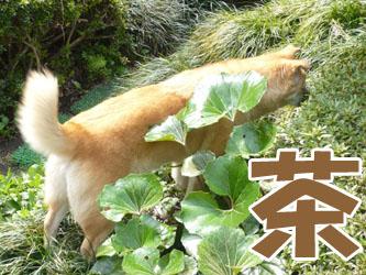 YUKI8_B.jpg