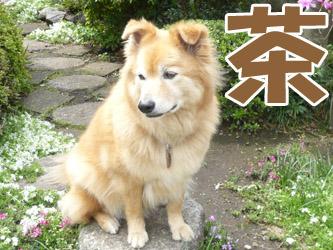 YUKI8_C.jpg