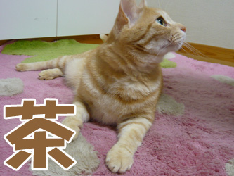 YUKI8_E.jpg