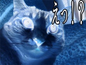 YUKI8_H.jpg