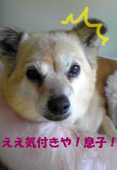YUKI_C.jpg