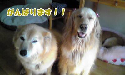 YUKI_D.jpg